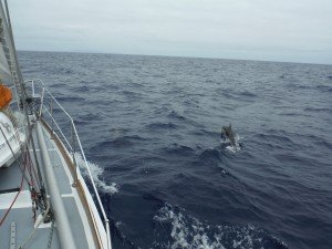 Les dauphins nous accompagnent